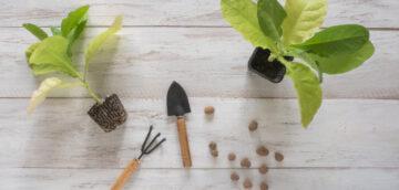 Инструкция по выращиванию и уходу за рассадой табака